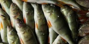 fischzucht